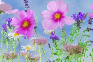 Le cerveau est comme un jardin dont vous êtes le jardinier
